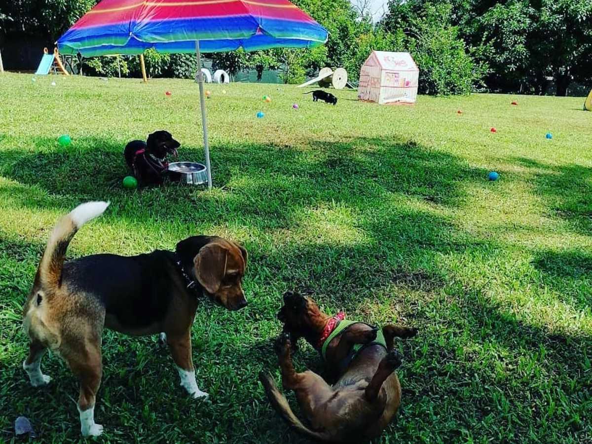 Pets Vacation Resort, es un hotel vacacional-recreativo para mascotas, ubicado en Orotina, Alajuela, donde los animales pueden disfrutar libremente. Fotografías: Cortesía Pets Vacation Resort