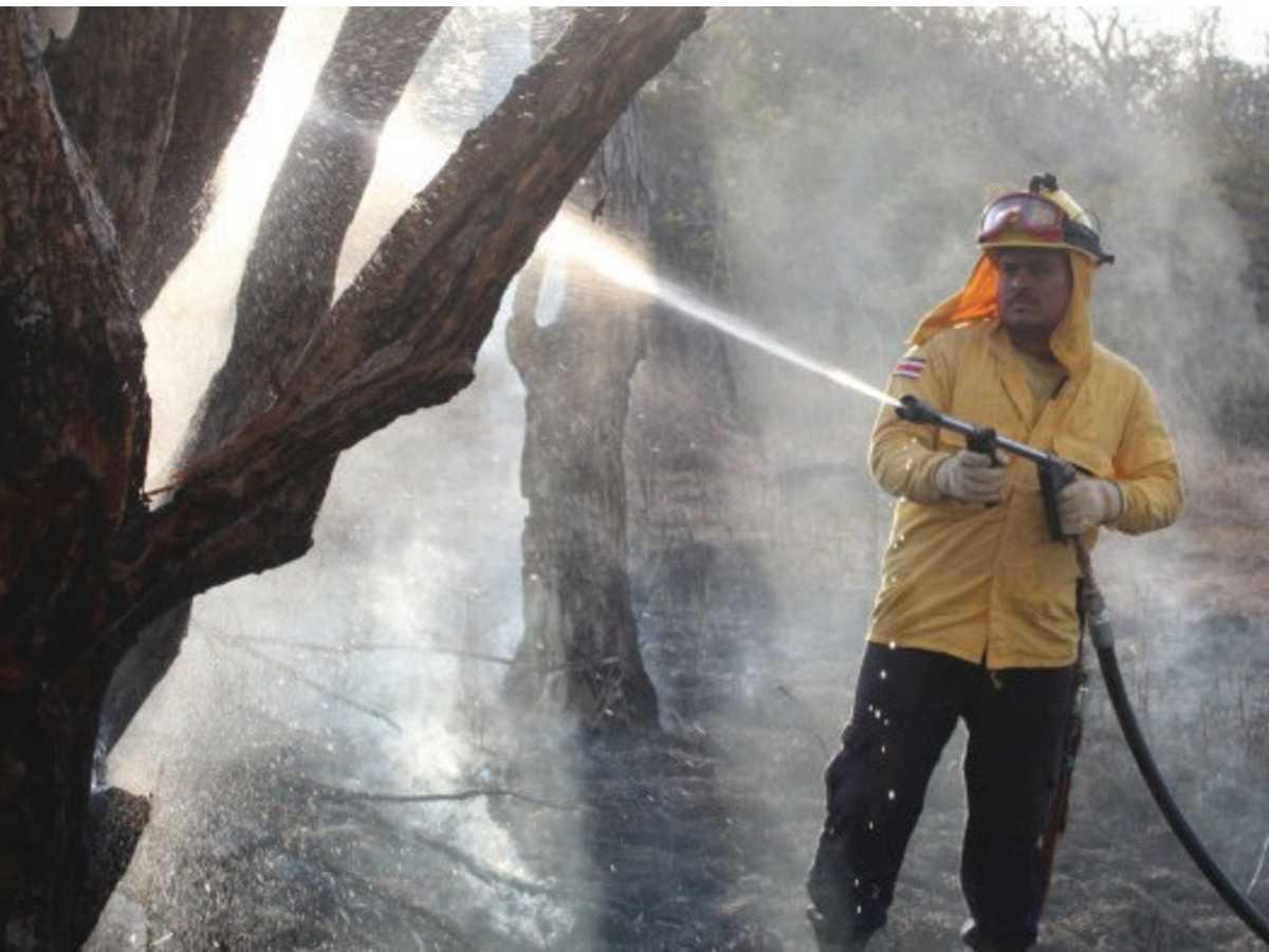 El ACG a través de su Programa Manejo del Fuego (PMF) concluyó la época seca con eventos por debajo del promedio de afectación de los últimos 10 años. Para este año se afectaron 1029.59 hectáreas dentro del ASP. Crédito de foto: ACG.