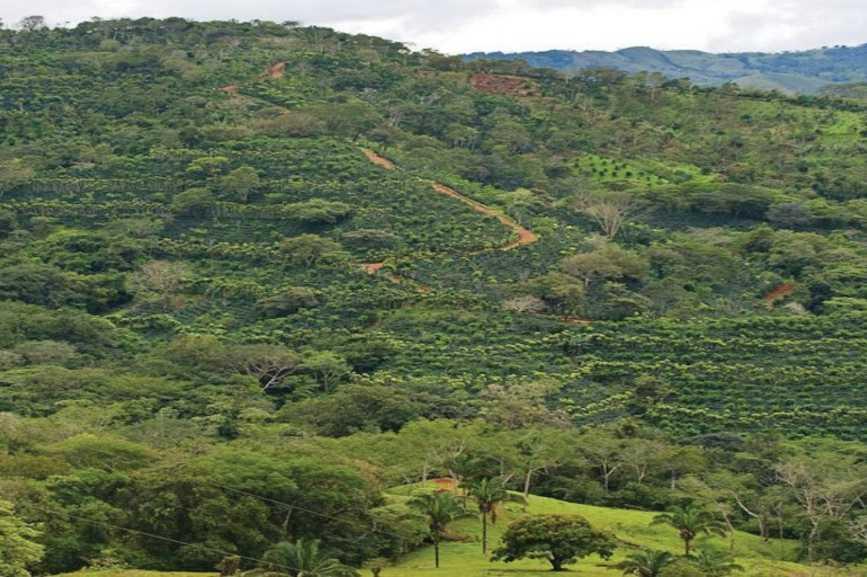 Ya se cuentan cerca de 1000 hectáreas de terreno plantadas con cítricos en el eje montañoso de la península. Nandayure y Hojancha concentran el 75% de esta cobertura y el resto se ubica en poblados como Zaragoza, Naranjal, Juan Díaz entre otros del cantón de Nicoya.