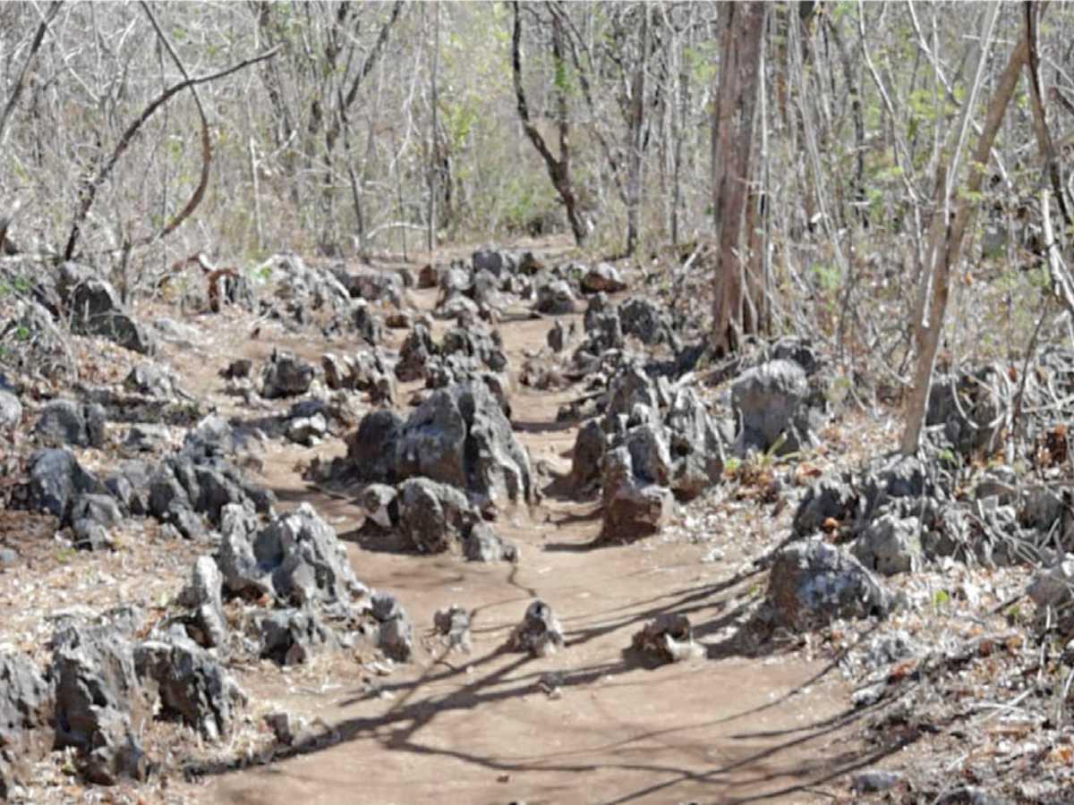 La piedra caliza, carater¡stica del lugar inmersas en parte de algunos tramos del sendero Los Laurales, antes de llegar al mirador. Credito de foto: Periódico Mensaje.